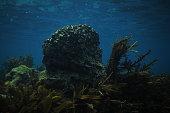 Lonely rock in kelp