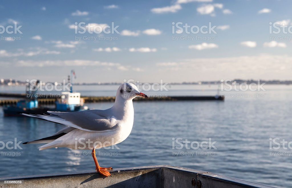 Lonely seagull in harbor of Poole, United Kingdom stock photo