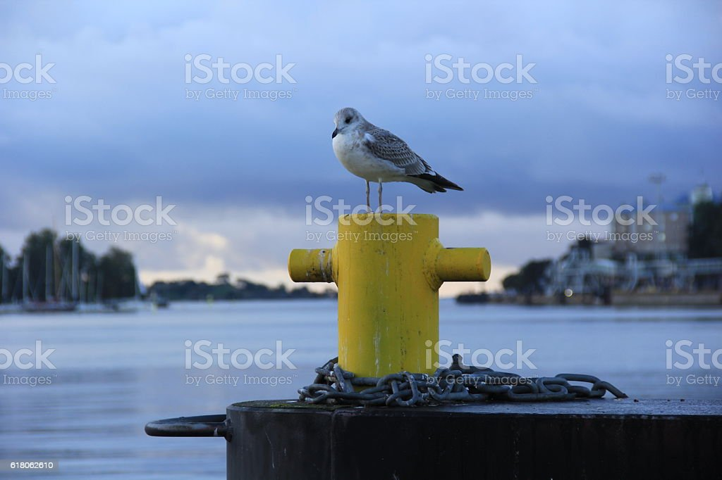 Lonely seagull sitting on a yellow bollard at the seaport stock photo
