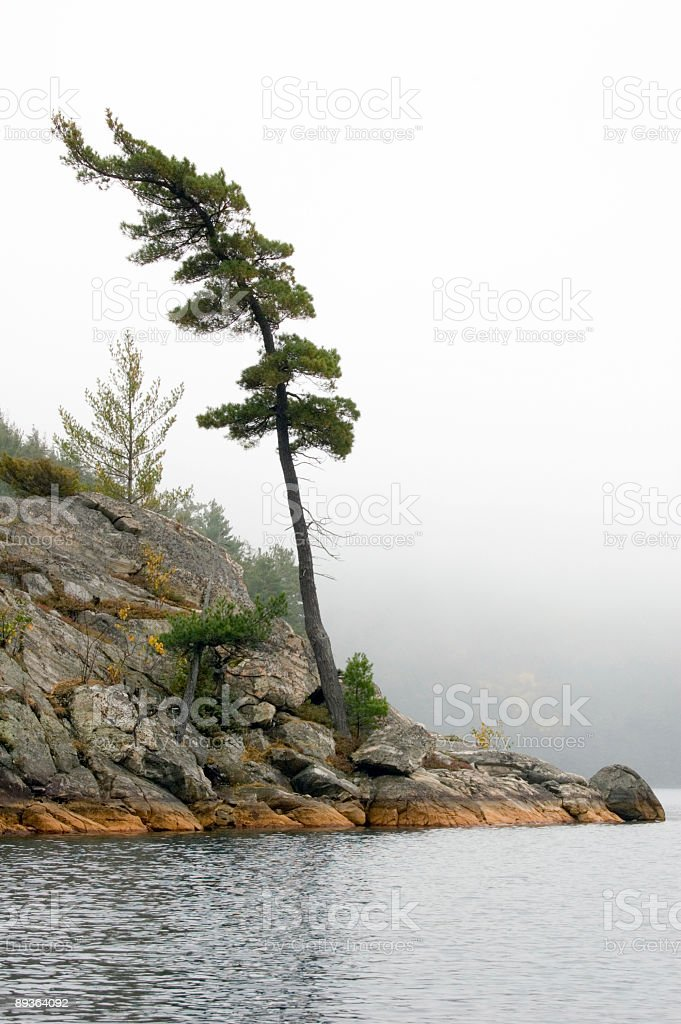 Lonely spruce stock photo