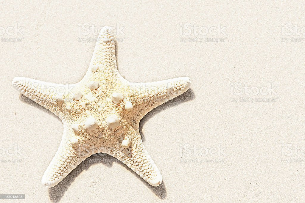 Lonely starfish on beach with copy space stock photo