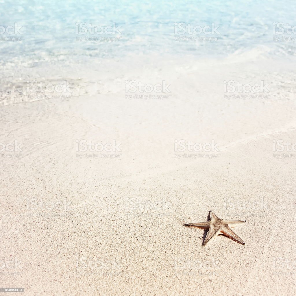 Lonely starfish on the beach royalty-free stock photo
