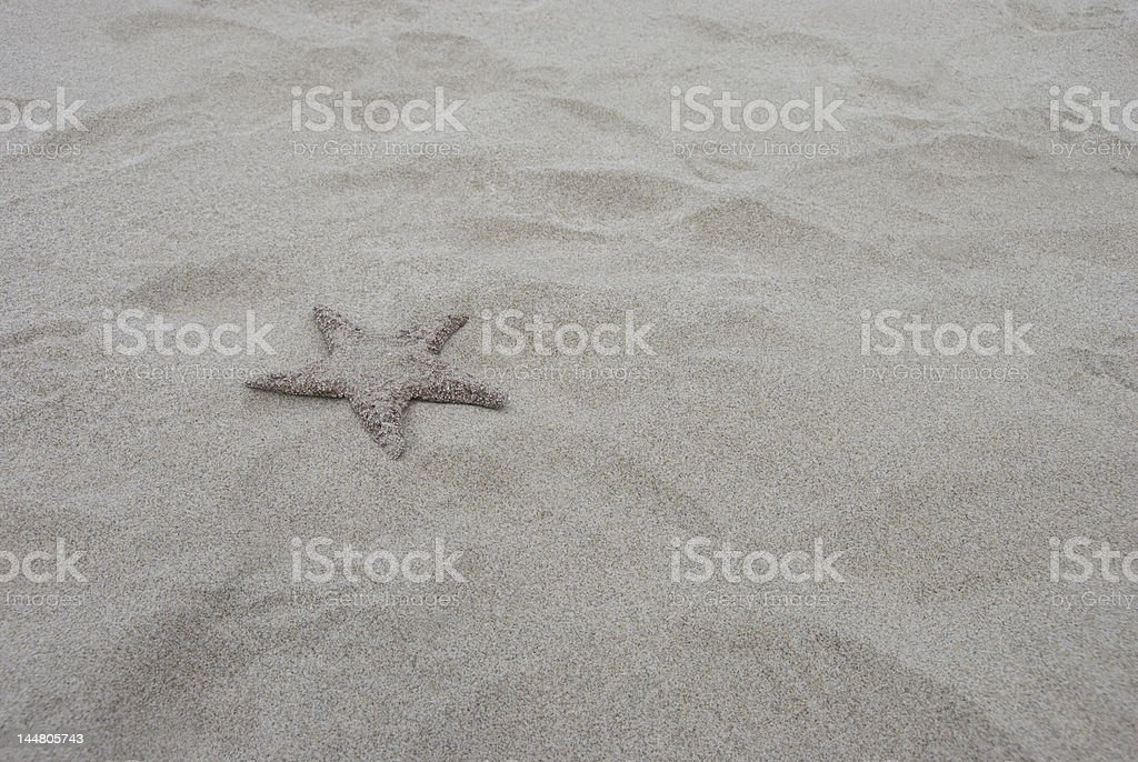 Lonely Starfish stock photo