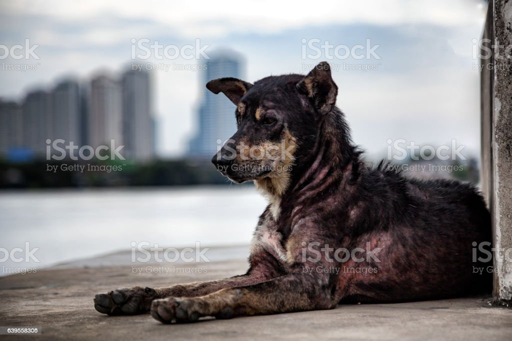 Lonely stray mangy dog at pier. stock photo