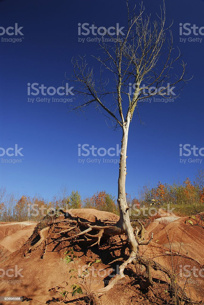 Lonely Survivor royalty-free stock photo