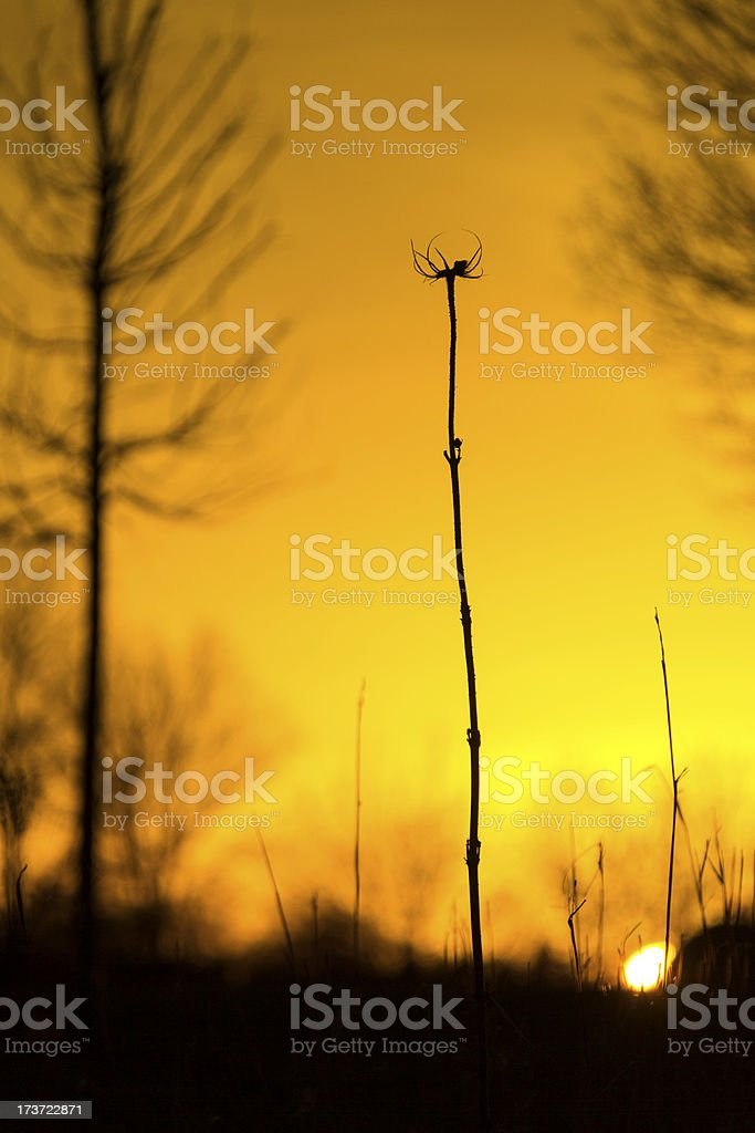 Lonely Thistle at Sunset - Vertical royalty-free stock photo
