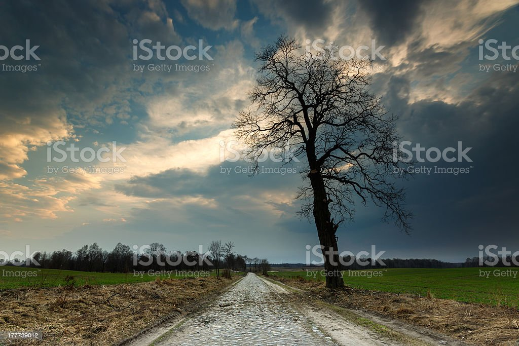 Lonely tree and country road stock photo