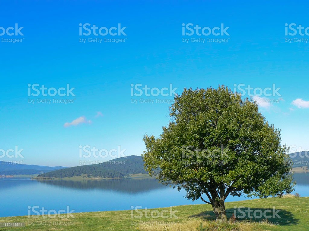 Lonely tree and lake. royalty-free stock photo