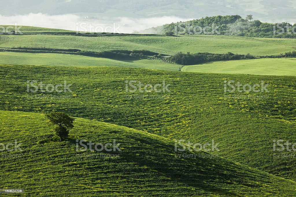Lonely Tree and Rolling Hills, Tuscany, Italy royalty-free stock photo