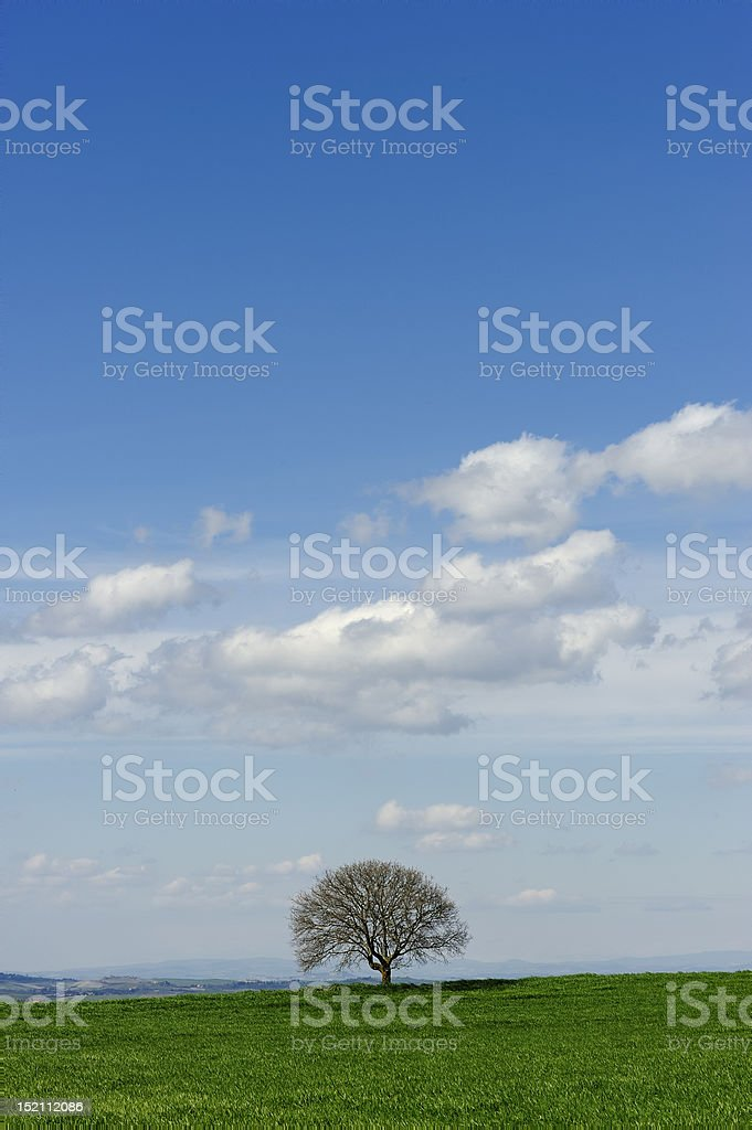 lonely tree at early springtime - blue sky with clouds stock photo