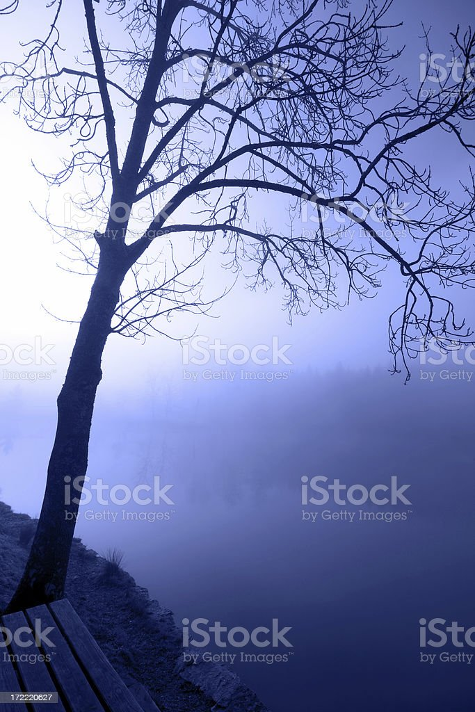 lonely tree by lakeside royalty-free stock photo