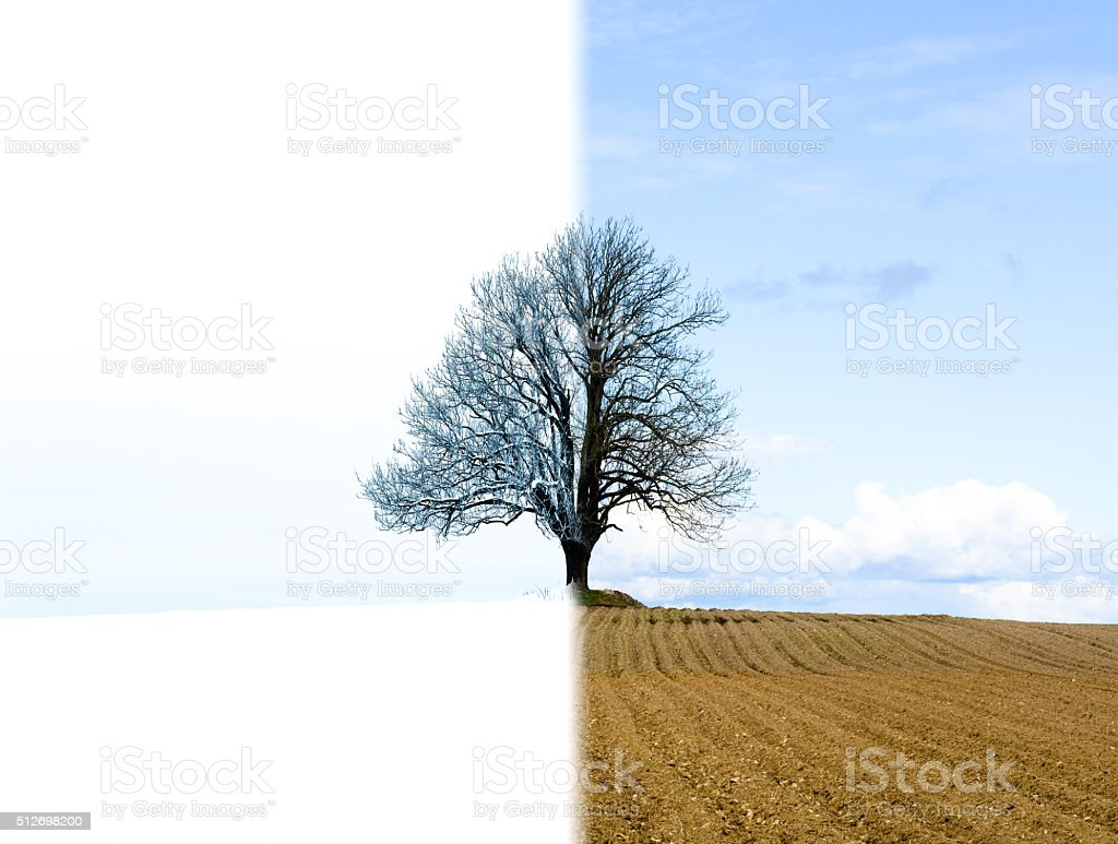 Lonely tree change from winter to spring stock photo