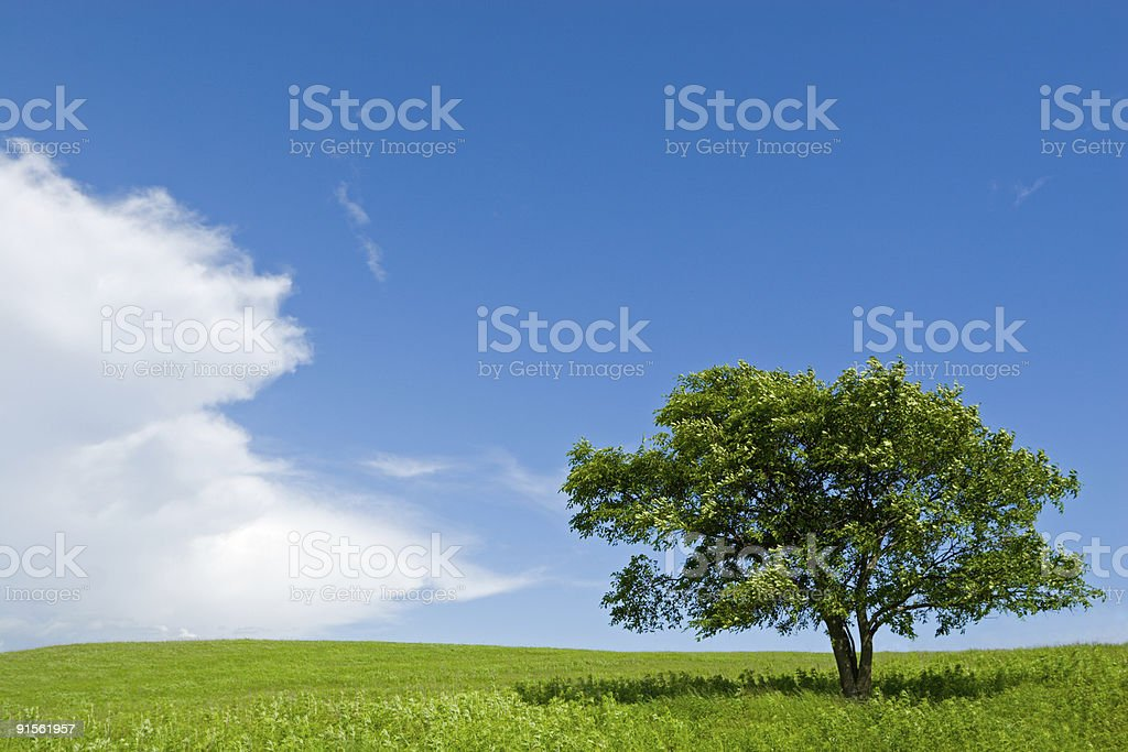 Lonely tree & Green field royalty-free stock photo
