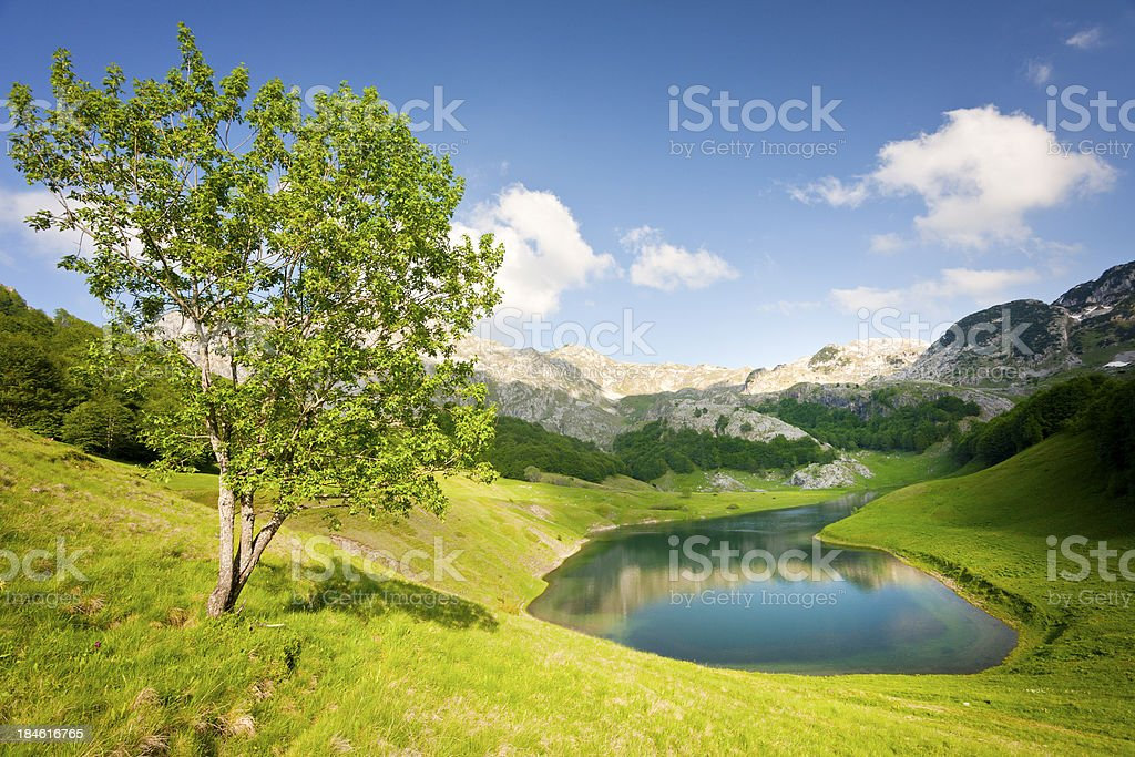Lonely tree high in a mountain stock photo