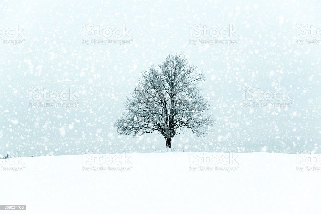 Lonely tree in a winter landcape stock photo