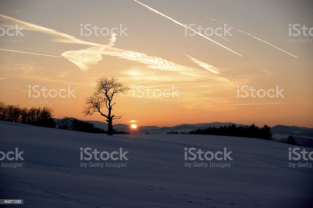 Lonely Tree in a Winterlandscape stock photo