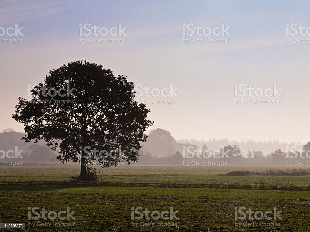 Lonely tree in agricultural landscape during morning mist royalty-free stock photo