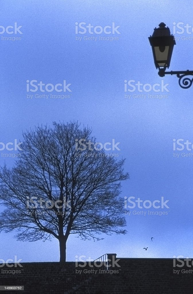 Lonely tree in blue sky royalty-free stock photo