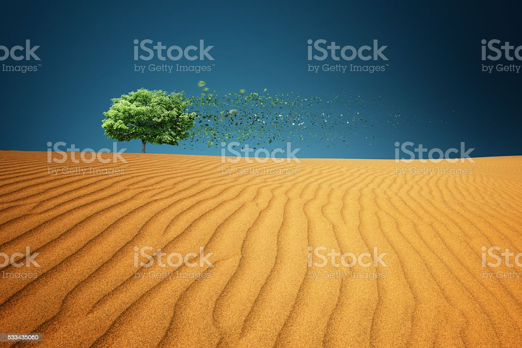 Lonely Tree In Dessert stock photo