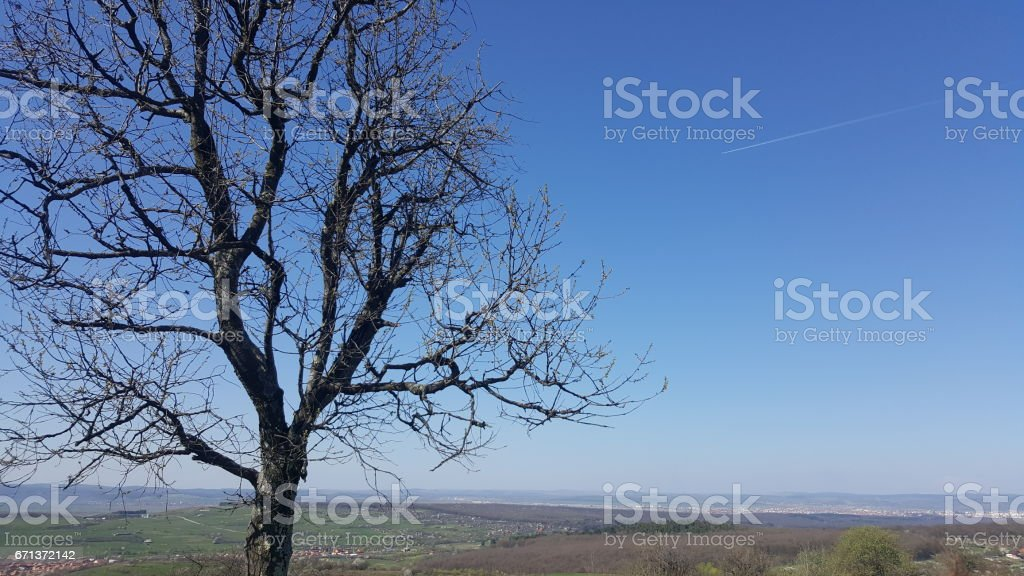 Lonely tree in early spring stock photo