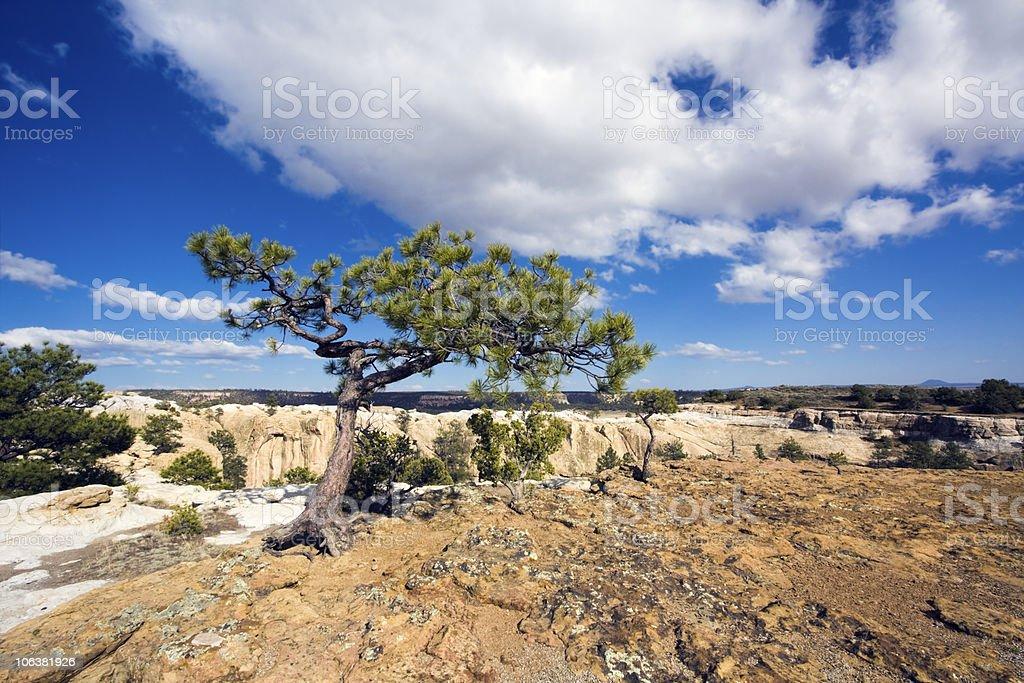 Lonely Tree in El Morro stock photo