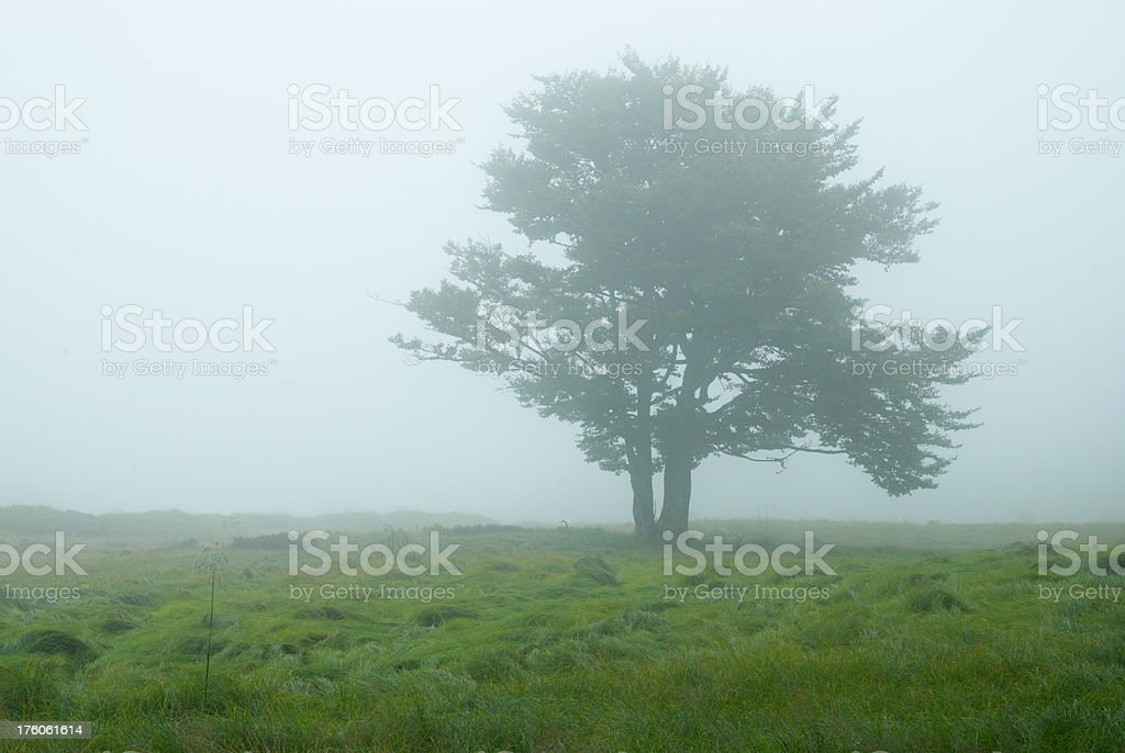 lonely tree in fog royalty-free stock photo