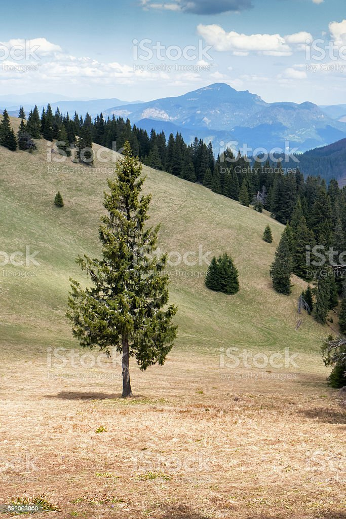 Lonely tree in forest stock photo