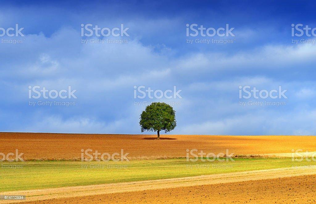 lonely tree in golden autumn light stock photo