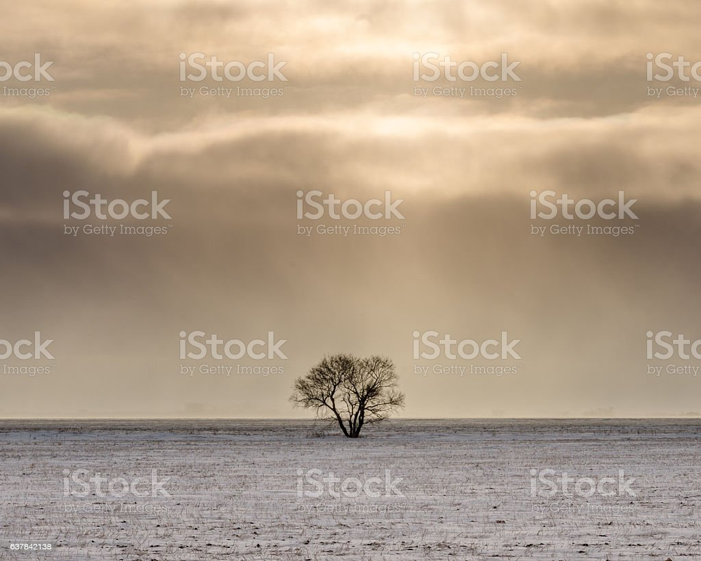 lonely tree in snowy field stock photo
