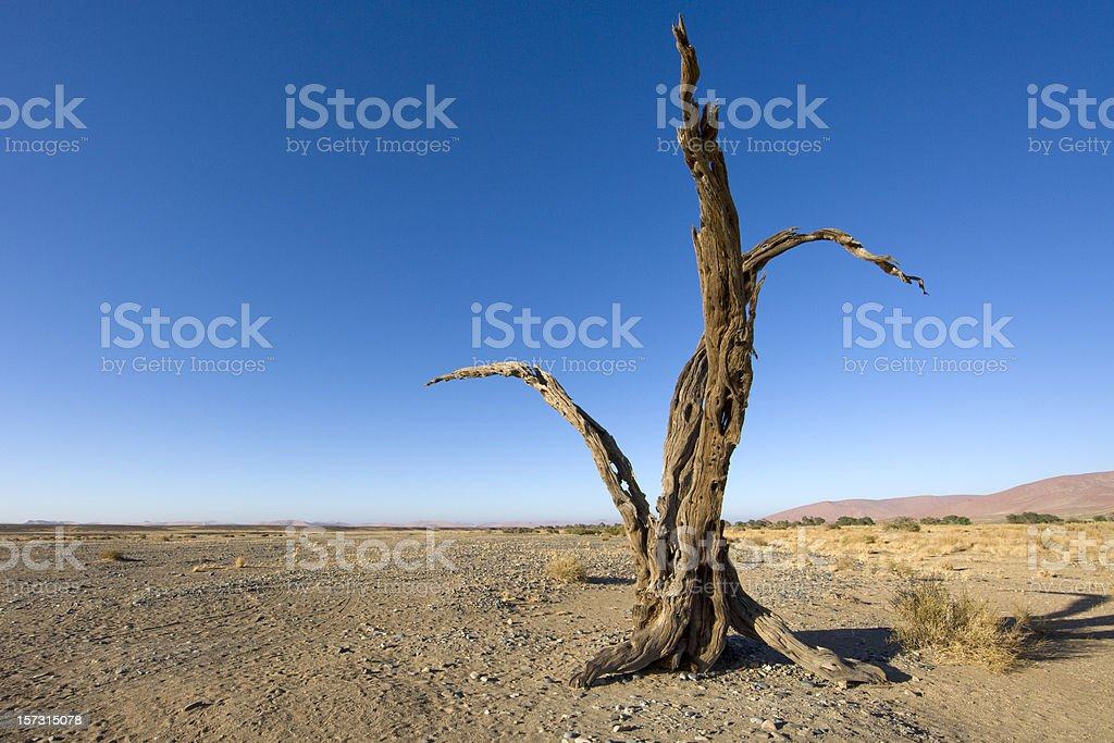 Lonely Tree in the Desert. royalty-free stock photo