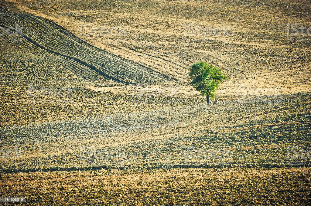 Lonely Tree In The Field, Tuscany stock photo