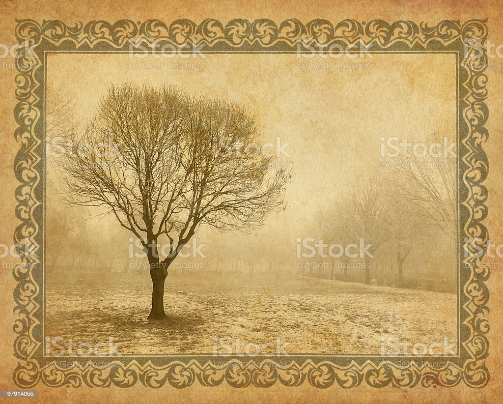 lonely tree in the foggy park royalty-free stock photo