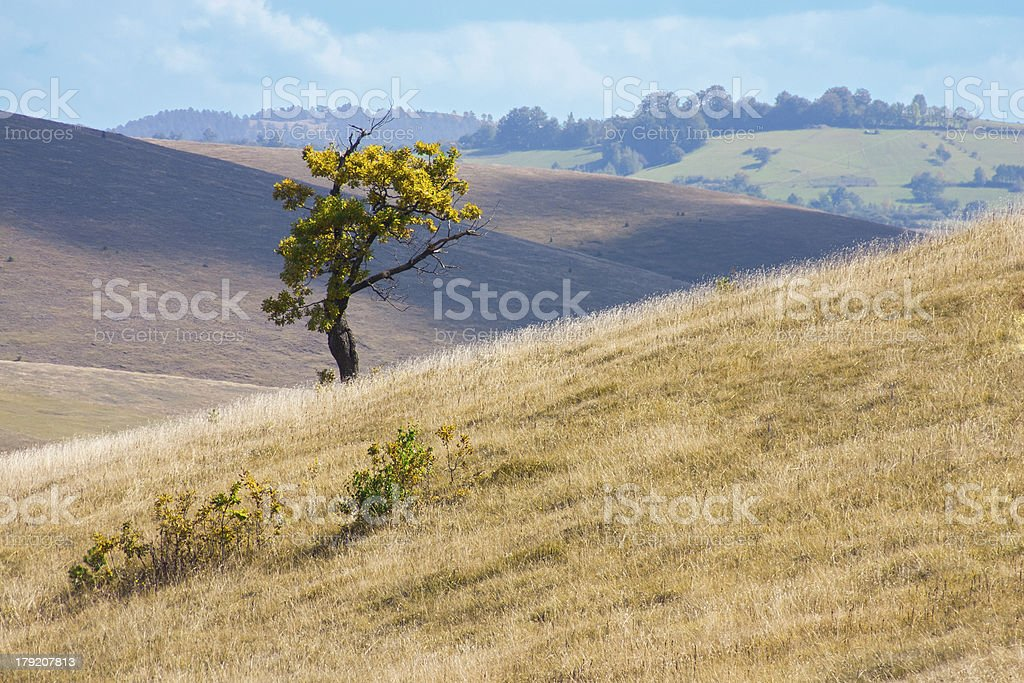 Lonely tree in the hills royalty-free stock photo