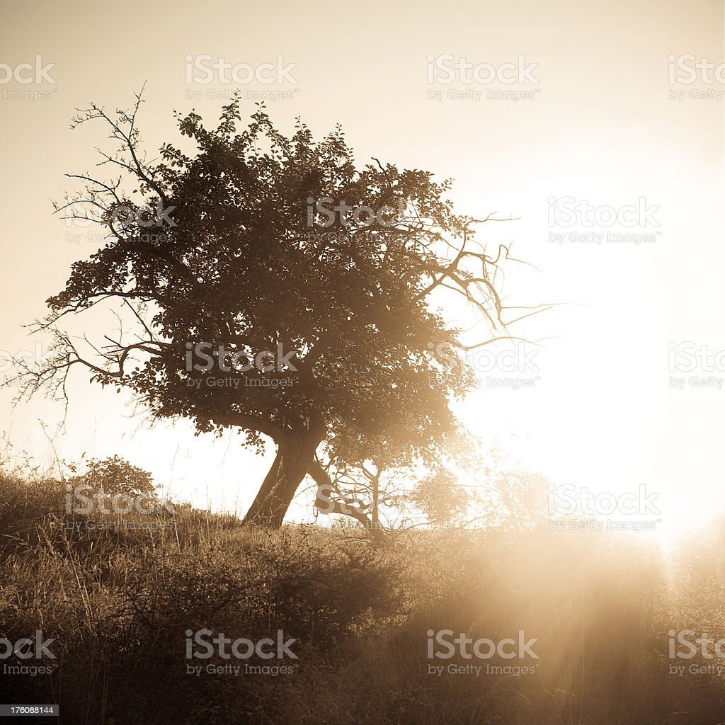 Lonely Tree In The Morning Sun royalty-free stock photo