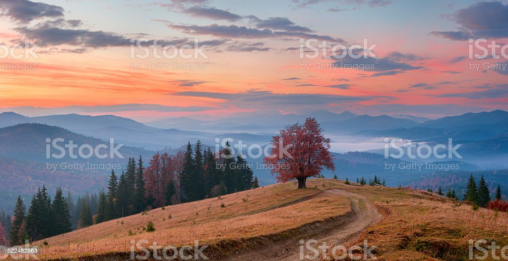 Lonely tree in the mountains stock photo