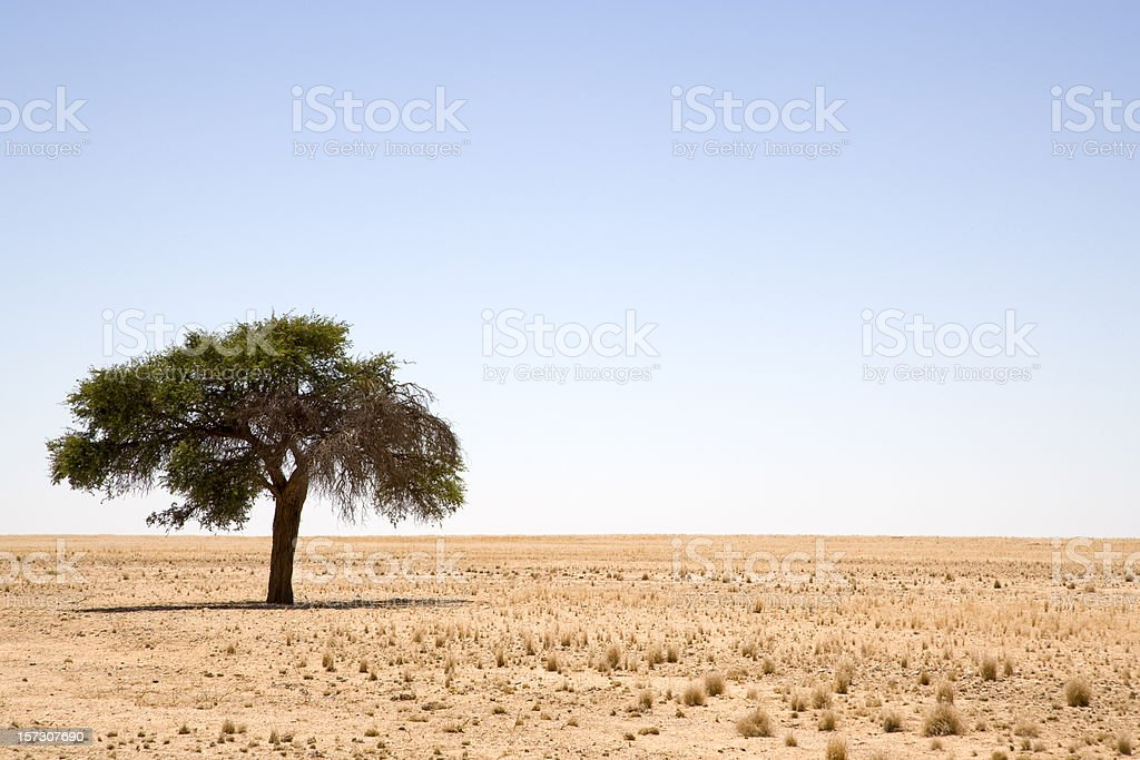 Lonely tree in the Prairie royalty-free stock photo