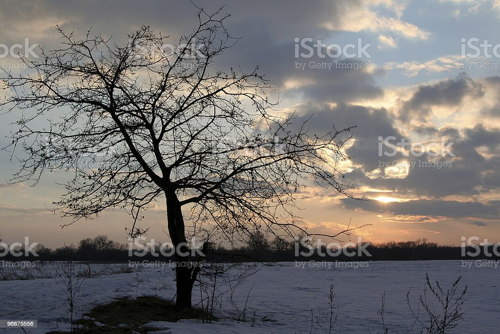 Lonely tree in the sunset royalty-free stock photo
