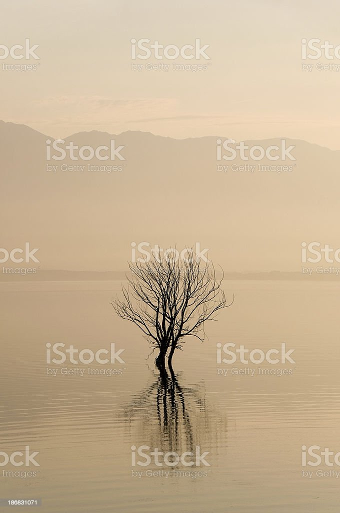 Lonely tree in the water on foggy sunrise royalty-free stock photo