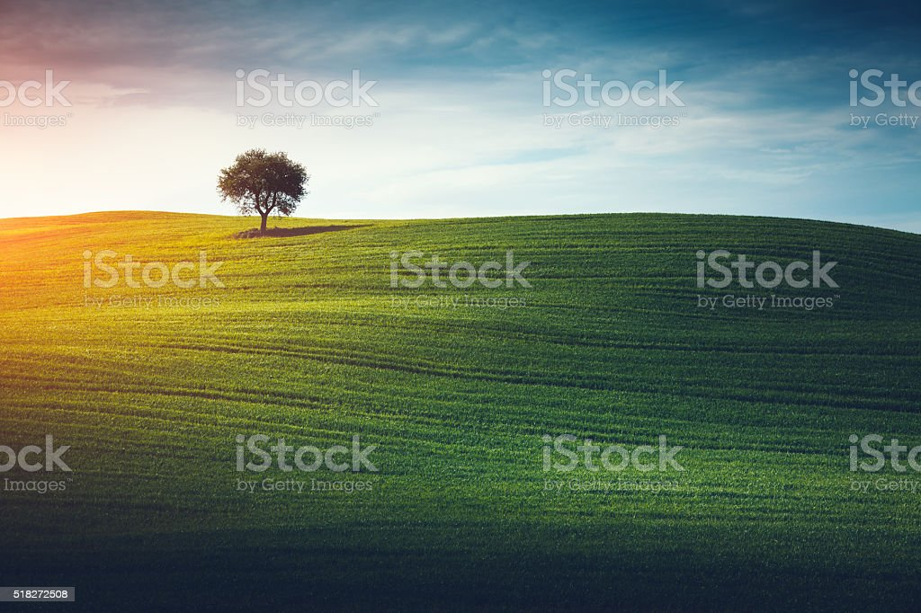 Lone tree in the middle of green field .