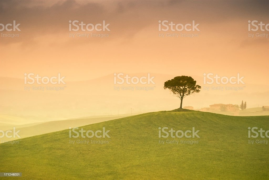 Lonely tree in Tuscany, Val d'Orcia royalty-free stock photo