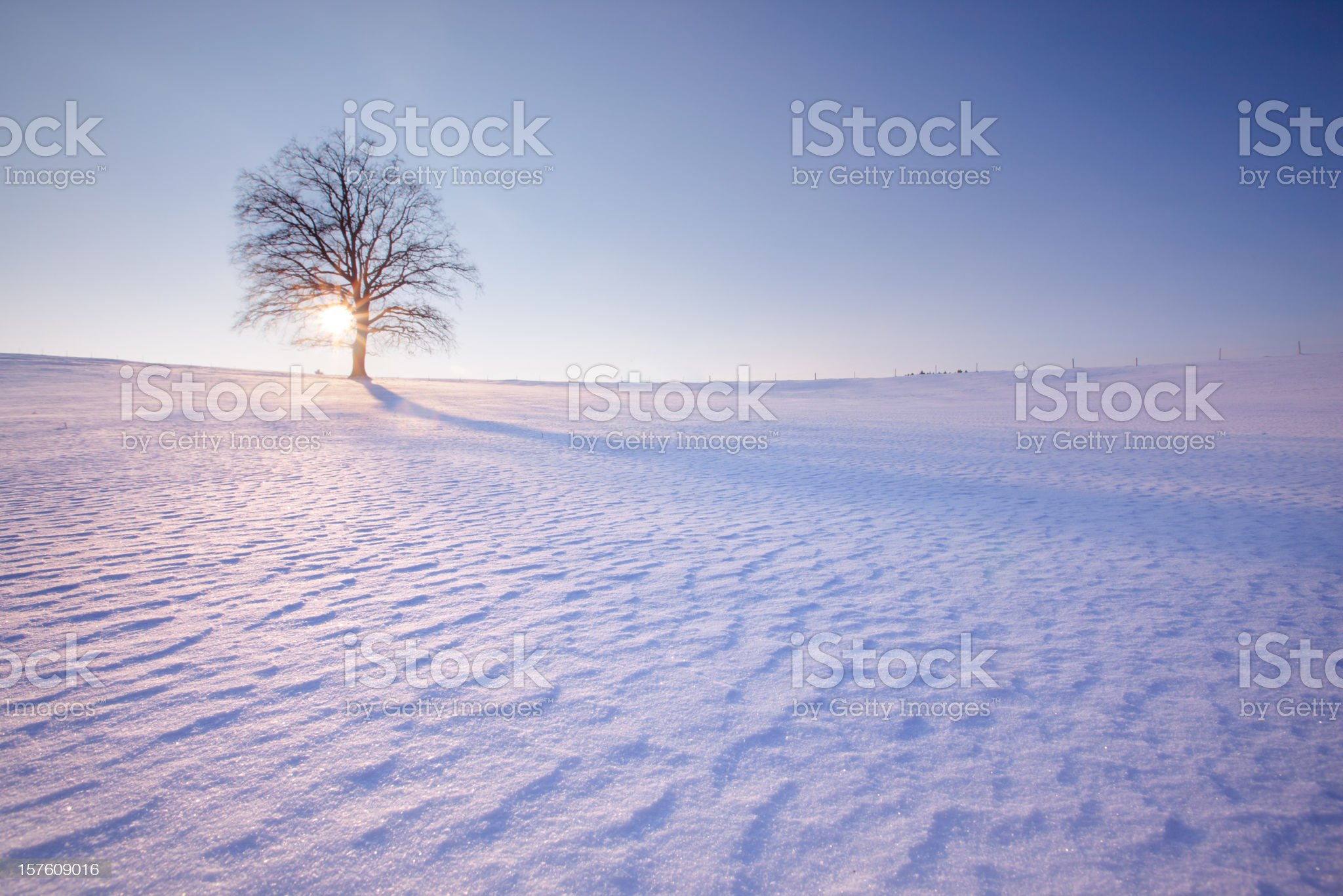 lonely tree in winter landscape - leftside royalty-free stock photo