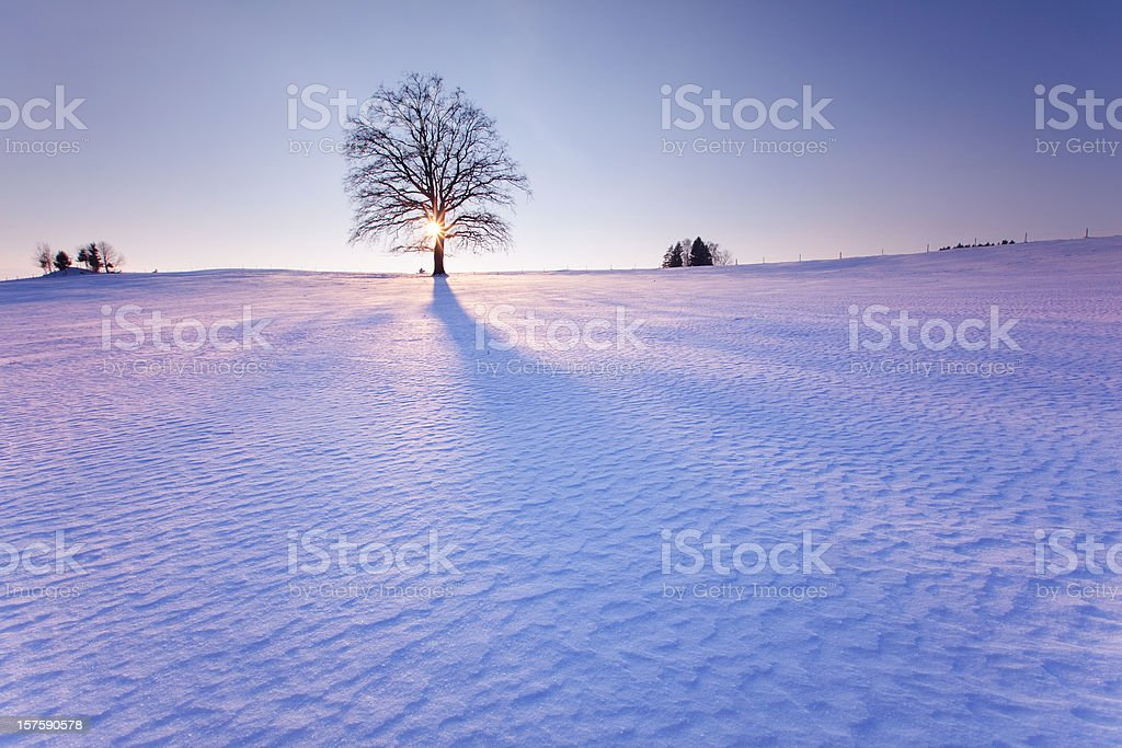 lonely tree in winter landscape royalty-free stock photo