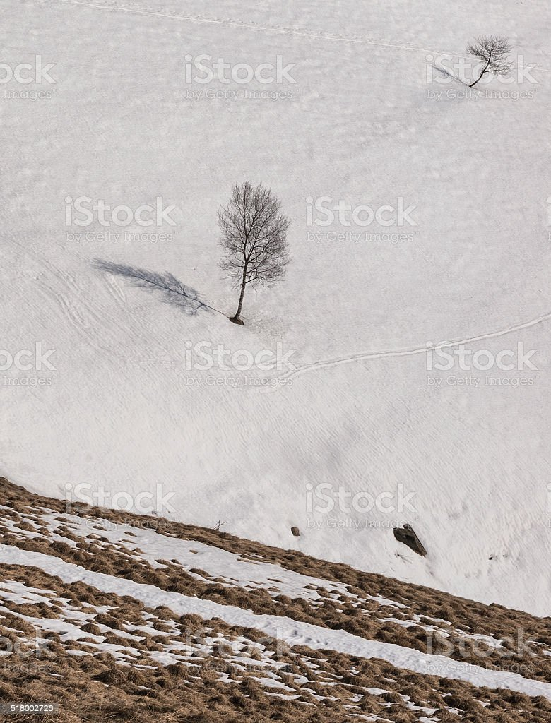 Lonely tree in winter mountain. stock photo
