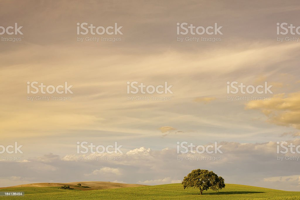 Lonely Tree Landscape at Sunset royalty-free stock photo