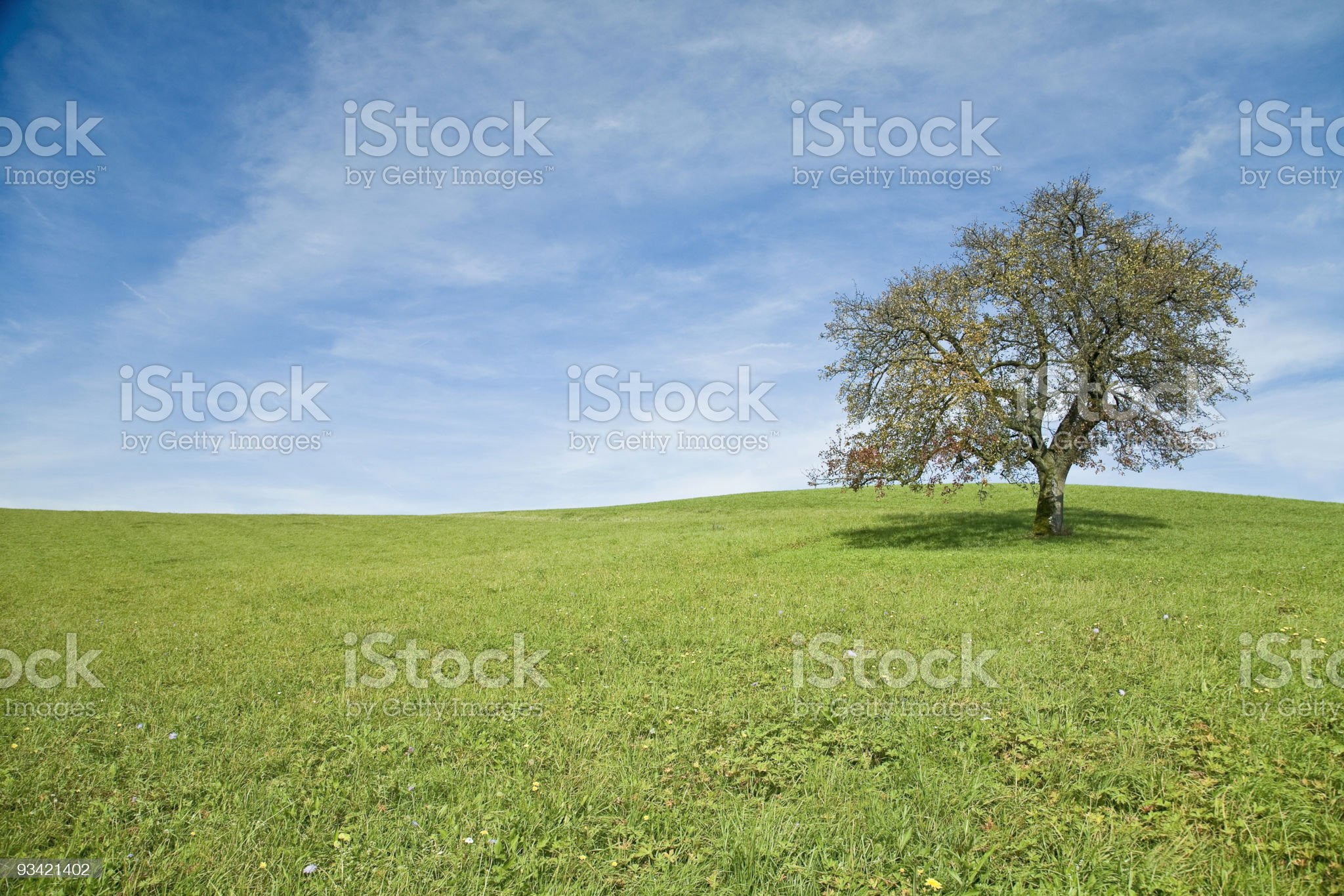lonely tree landscape royalty-free stock photo