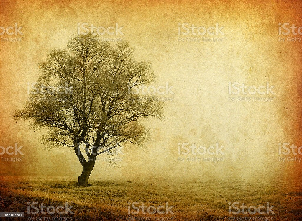 lonely tree - old photo royalty-free stock photo