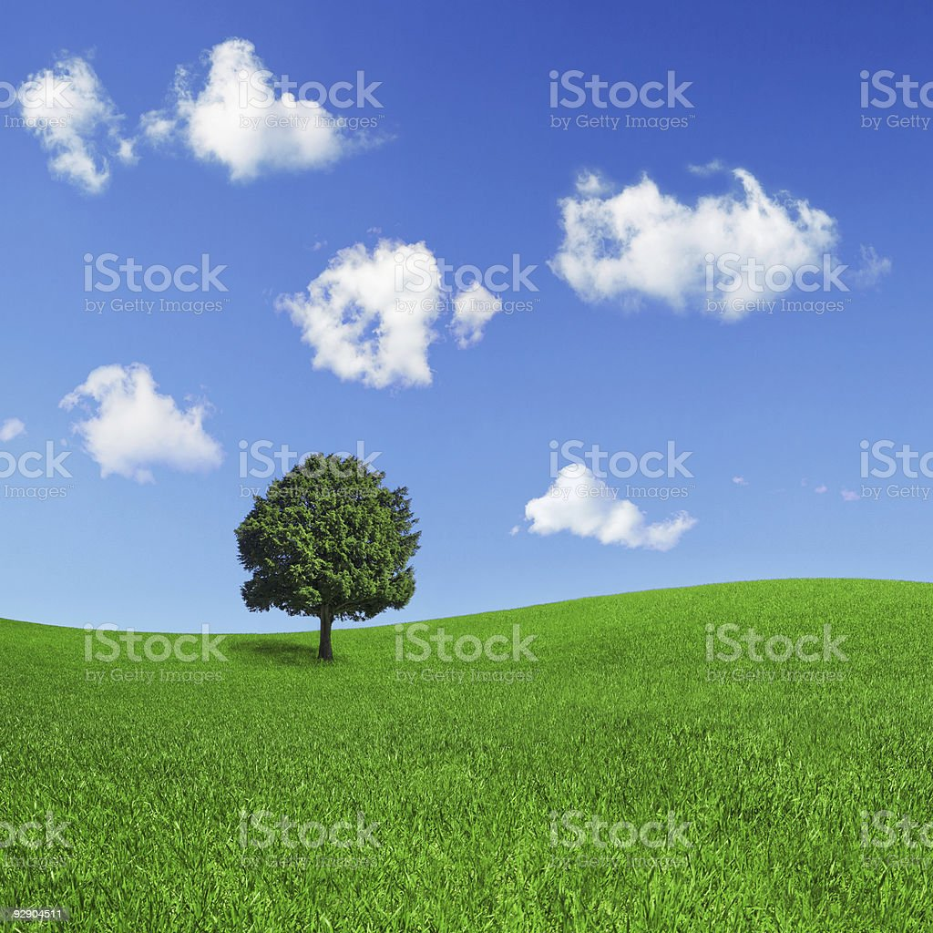 Lonely tree on a green field stock photo