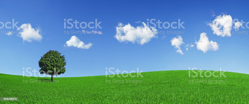 Lonely tree on a green field (XXLarge) stock photo
