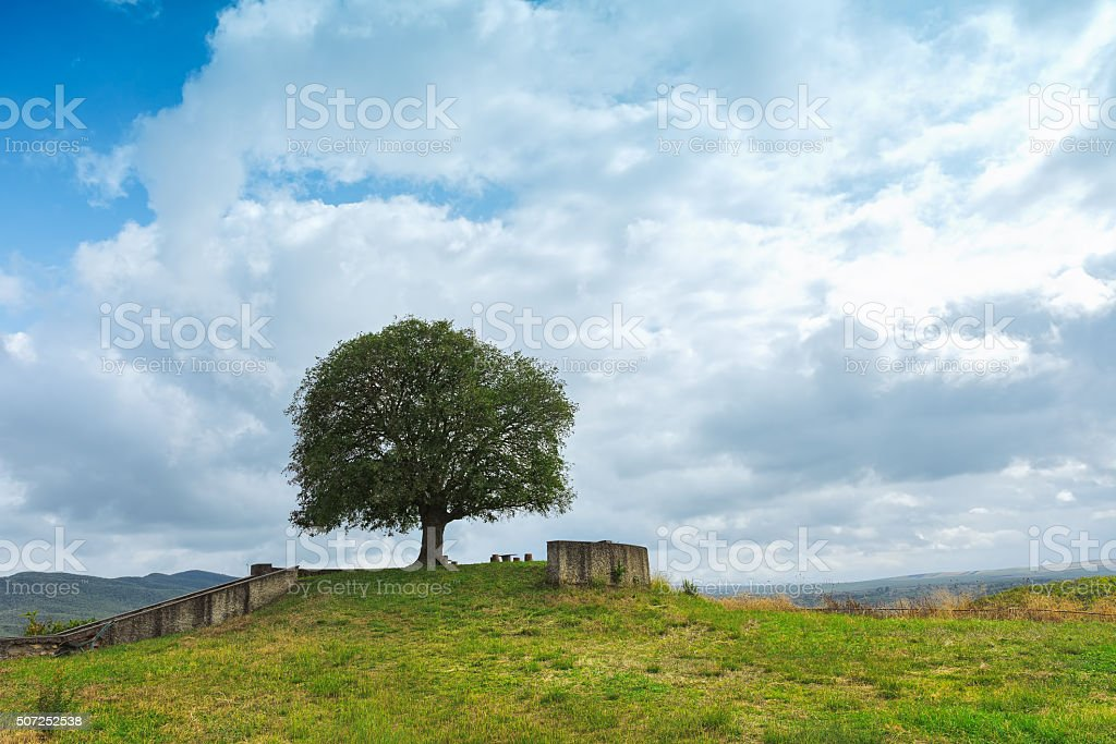 Lonely tree on a green meadow stock photo