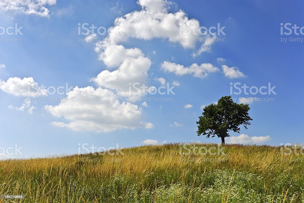 Lonely tree on a hill at meadow stock photo